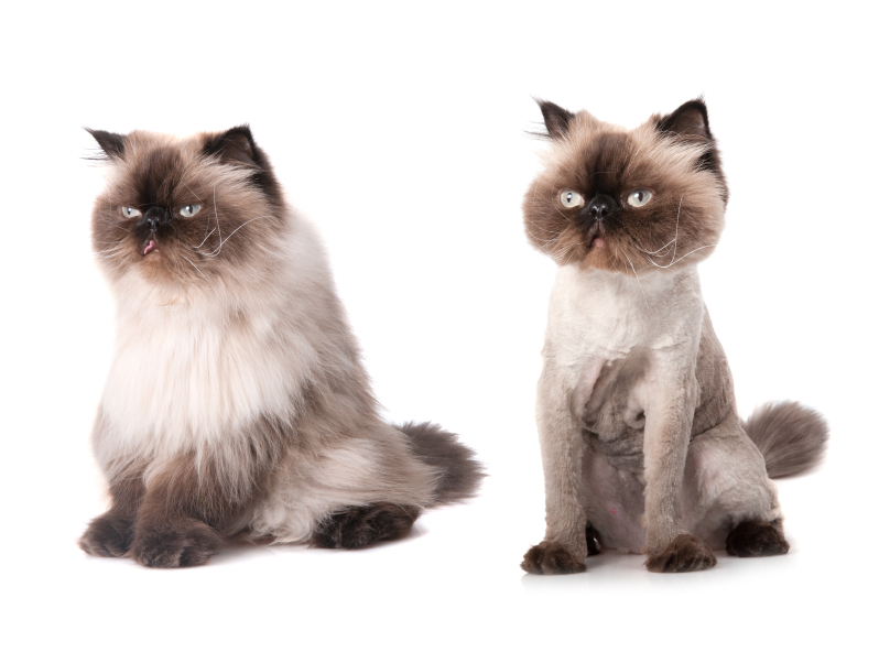 The Mobile Cat Groomer Istock 000019283429small The Mobile Cat